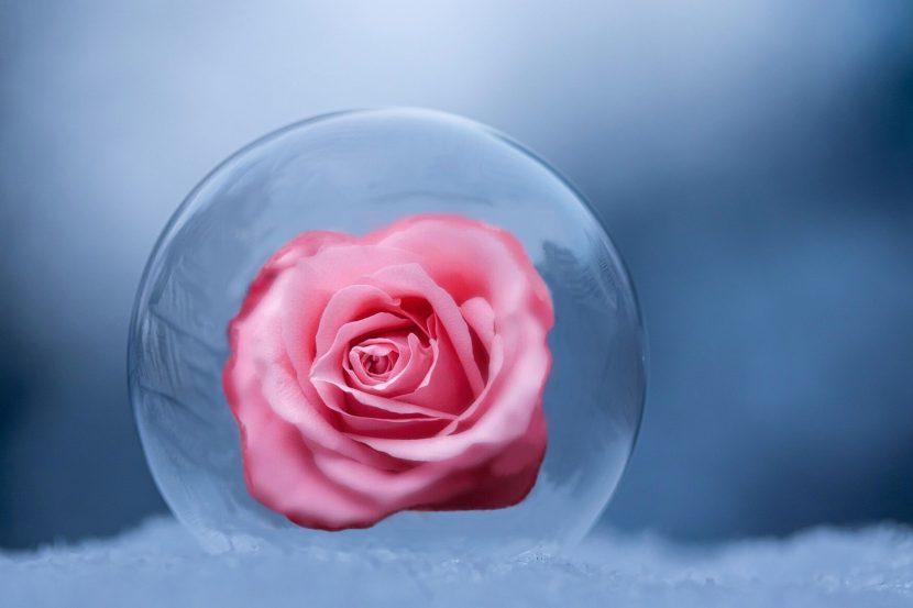 rose inside the ball